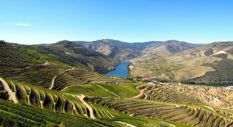Luxo no Douro: um guia exclusivo