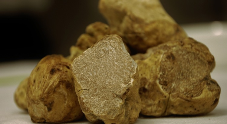 Algarve: find the best white truffle in the region!